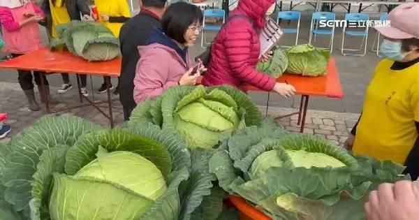 澎湖「巨無霸高麗菜」3顆近53台斤 蟬聯2年冠軍