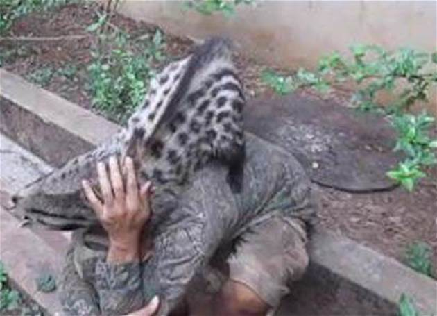 """被中國人當寵物,在澳洲卻成了""""最兇殘的動物"""",政府下血本處理"""