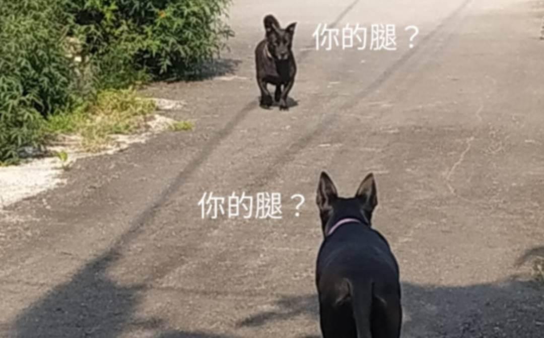 長腿汪散步偶遇短腿汪,兩隻狗子都懵了:你的腿咋了?