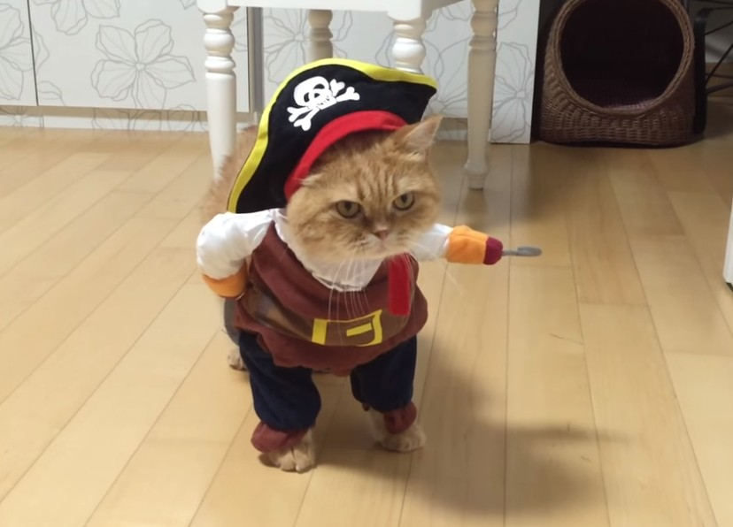 Un gato vestido de pirata fue la sensación en YouTube